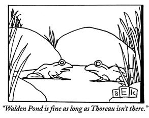 Thoreau frog